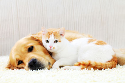 Pet Urine Pee Cleaning New Orleans